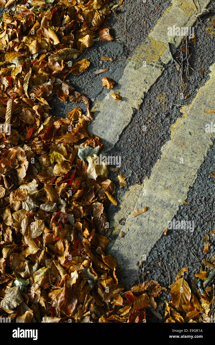 autumn-leaves-gather-over-double-yellow-