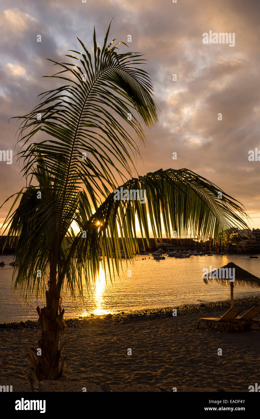 sunset-and-palm-tree-on-the-beach-at-pla