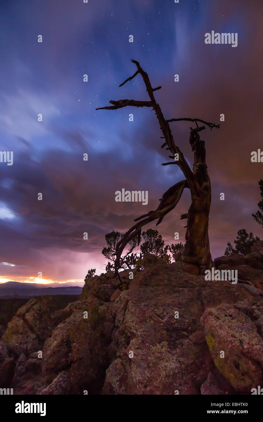 vertical image of old tree on a Colorado mountaintop with sunset colored storm clouds and lightning in the backdrop Stock Photo