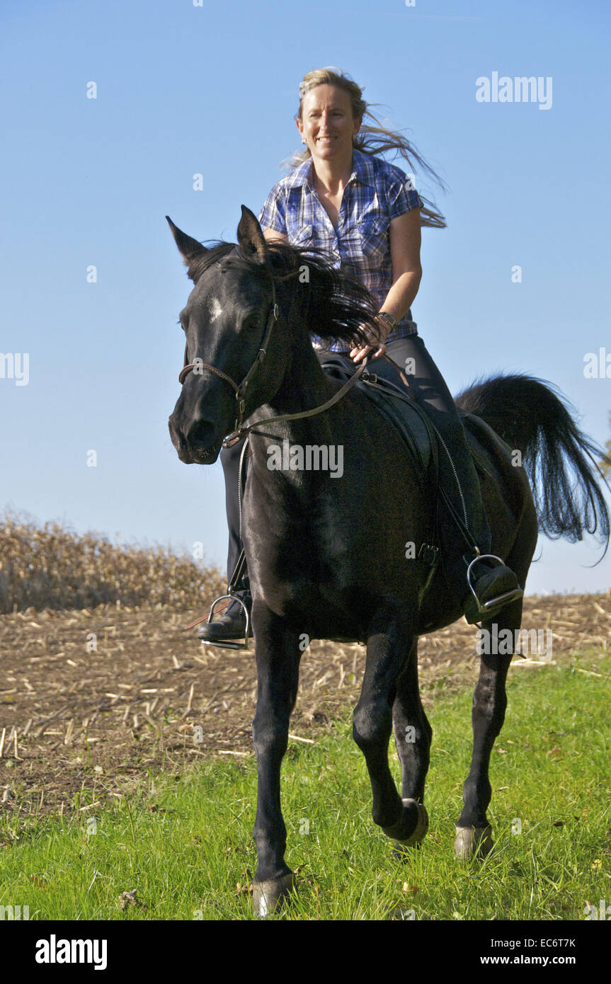Black arabian horse images