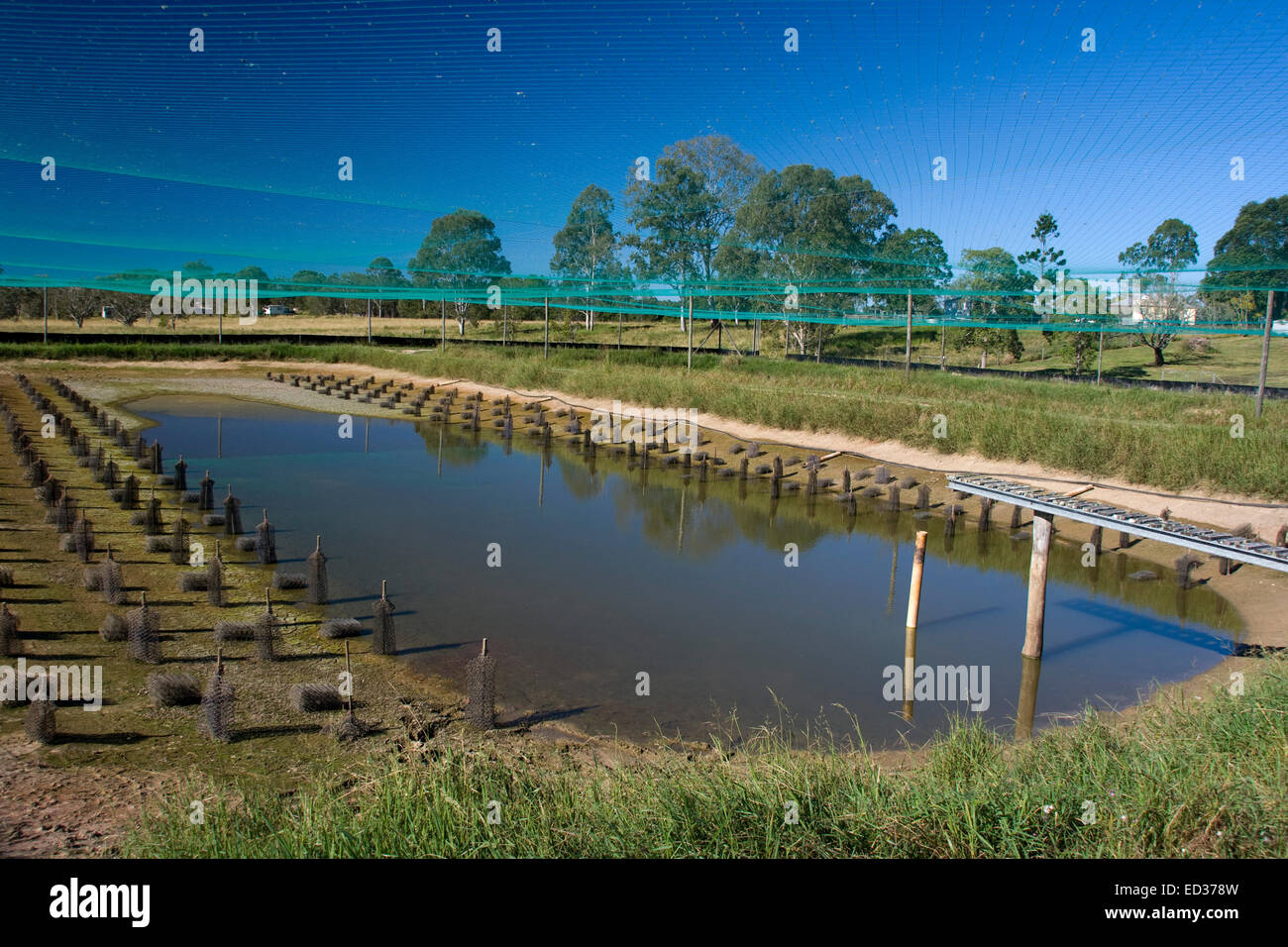 Large Outdoor Aquaculture Pond At Redclaw Crayfish Farm