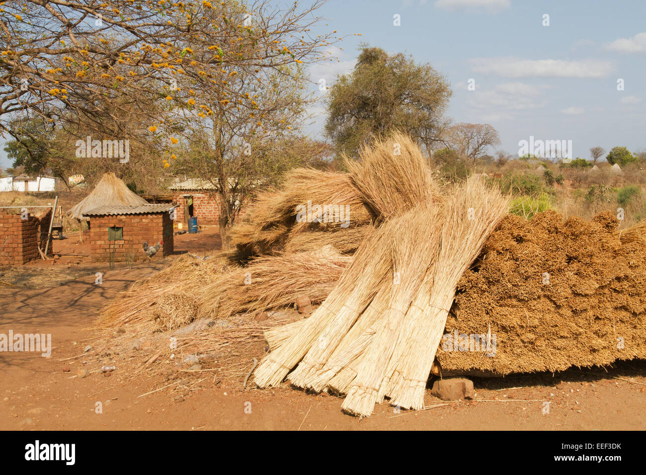 Pile Of Bundles Of Thatching Grass To Make A Thatched Roof