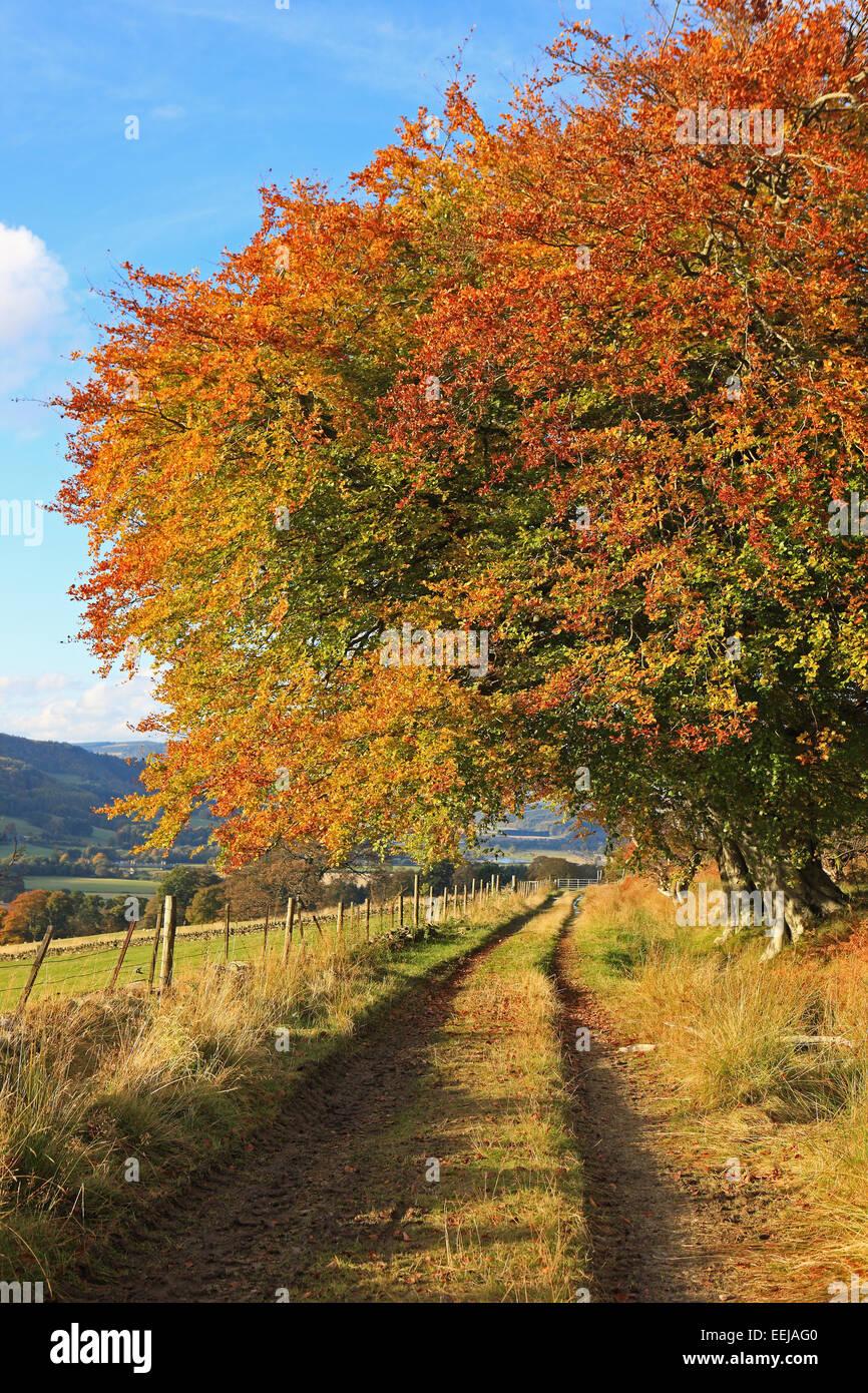 beautiful-tree-in-autumn-sunshine-in-per