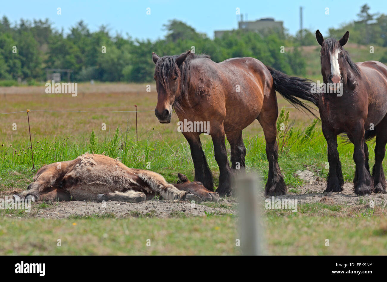Horses Standing In Sunshine On Green Grass Inside Electric