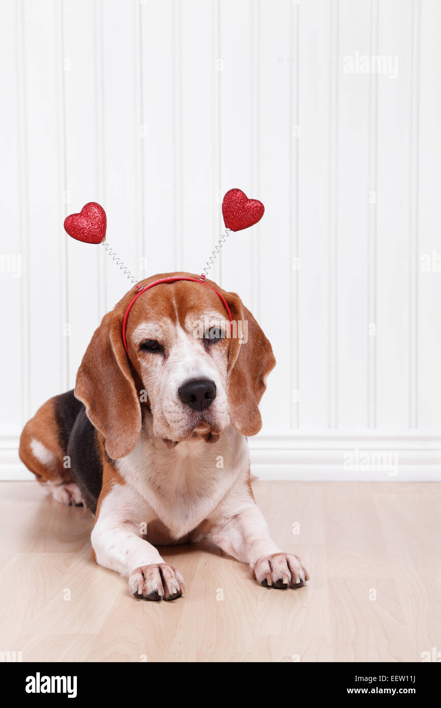 Dog Valentines Day Costume