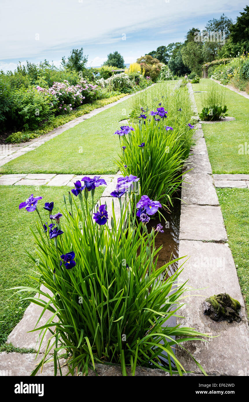 Water irises in a rill in a gertrude jekyll garden in for Gertrude jekyll garden designs