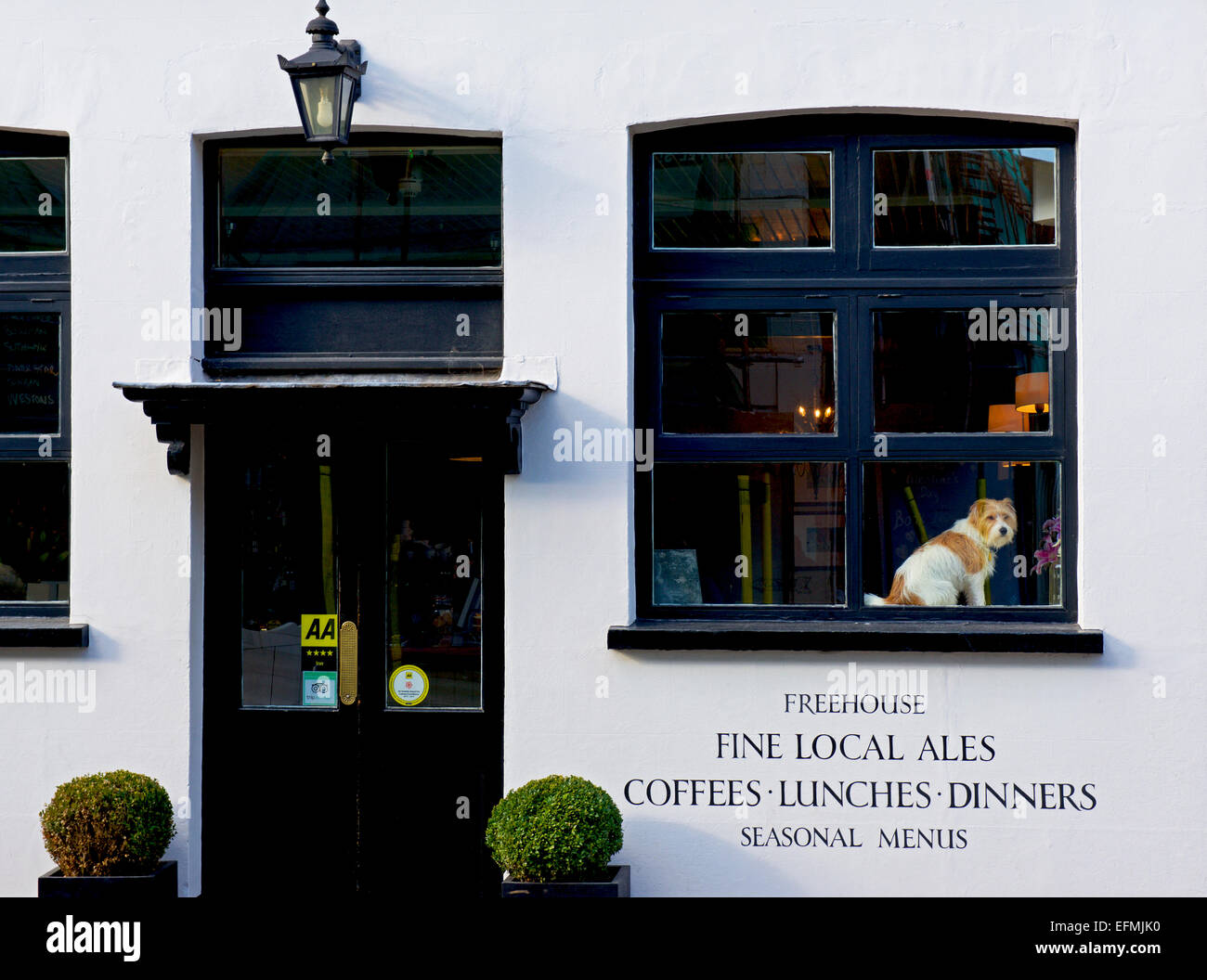 terrier-on-display-in-the-window-of-the-