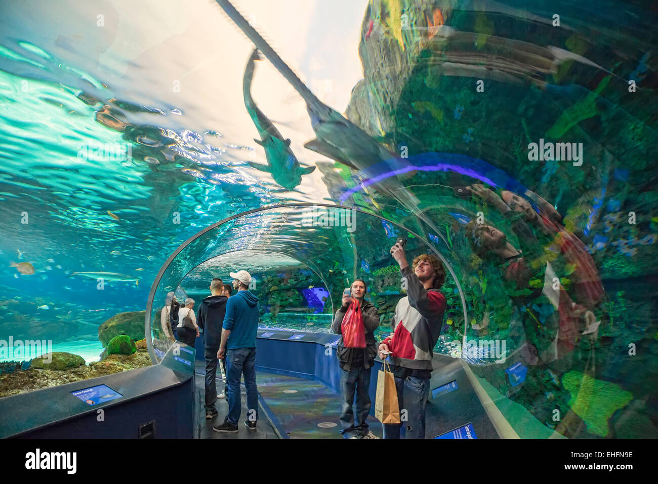 Ripleys aquarium in toronto ontario canada tourist for Places that sell fish near me