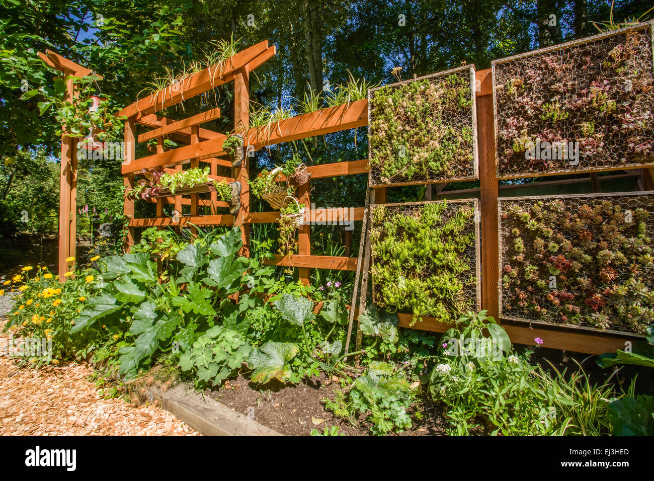 vertical vegetable garden growing on a beautiful wooden