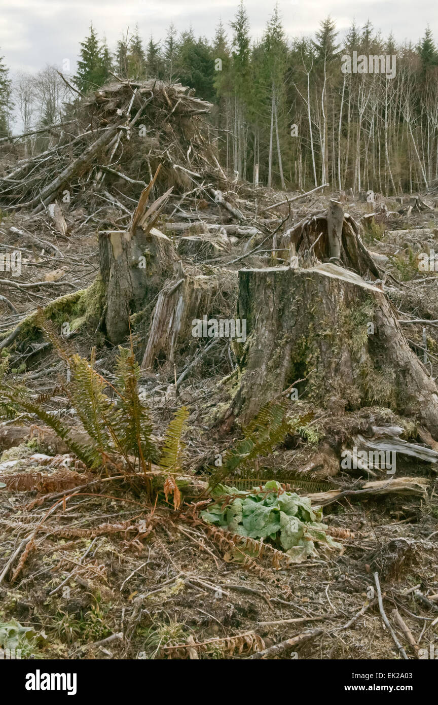 How detrimental clear cut logging is affecting the environment