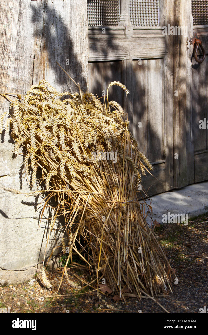 Harvest Festival Sheaf Of Corn In The Porch Of St. Mary's