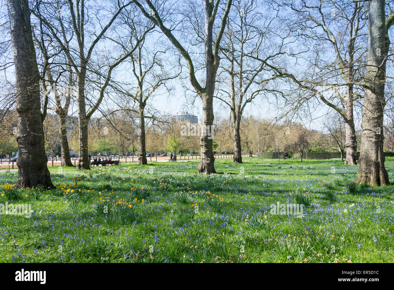 Hyde Park in spring, City of Westminster, London, Greater London, England, United Kingdom Stock Photo