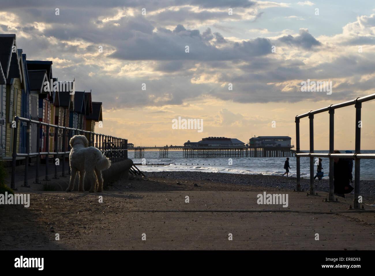 dog-on-seafront-beach-ER8D93.jpg