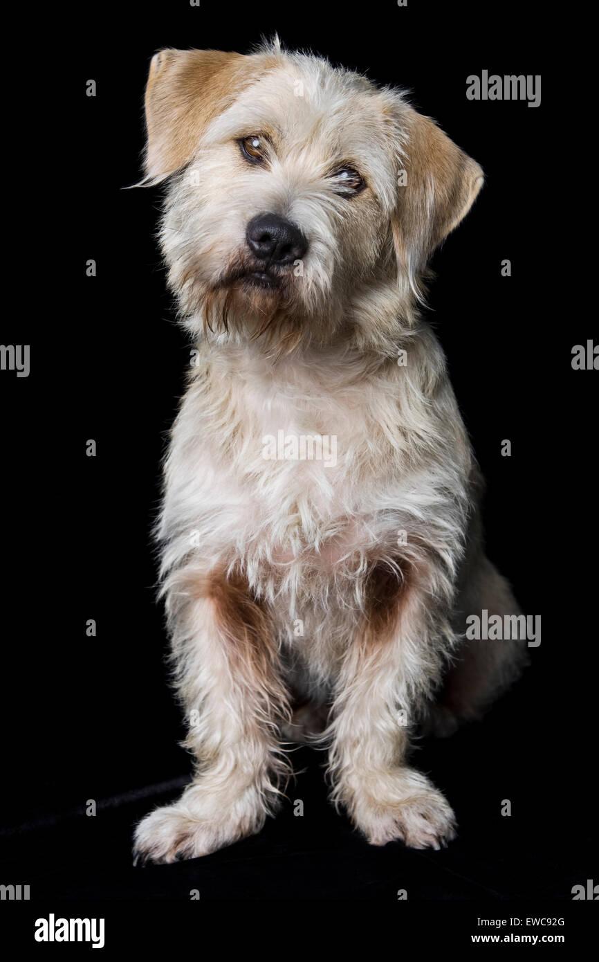 Tucson Dog Breed Rescue