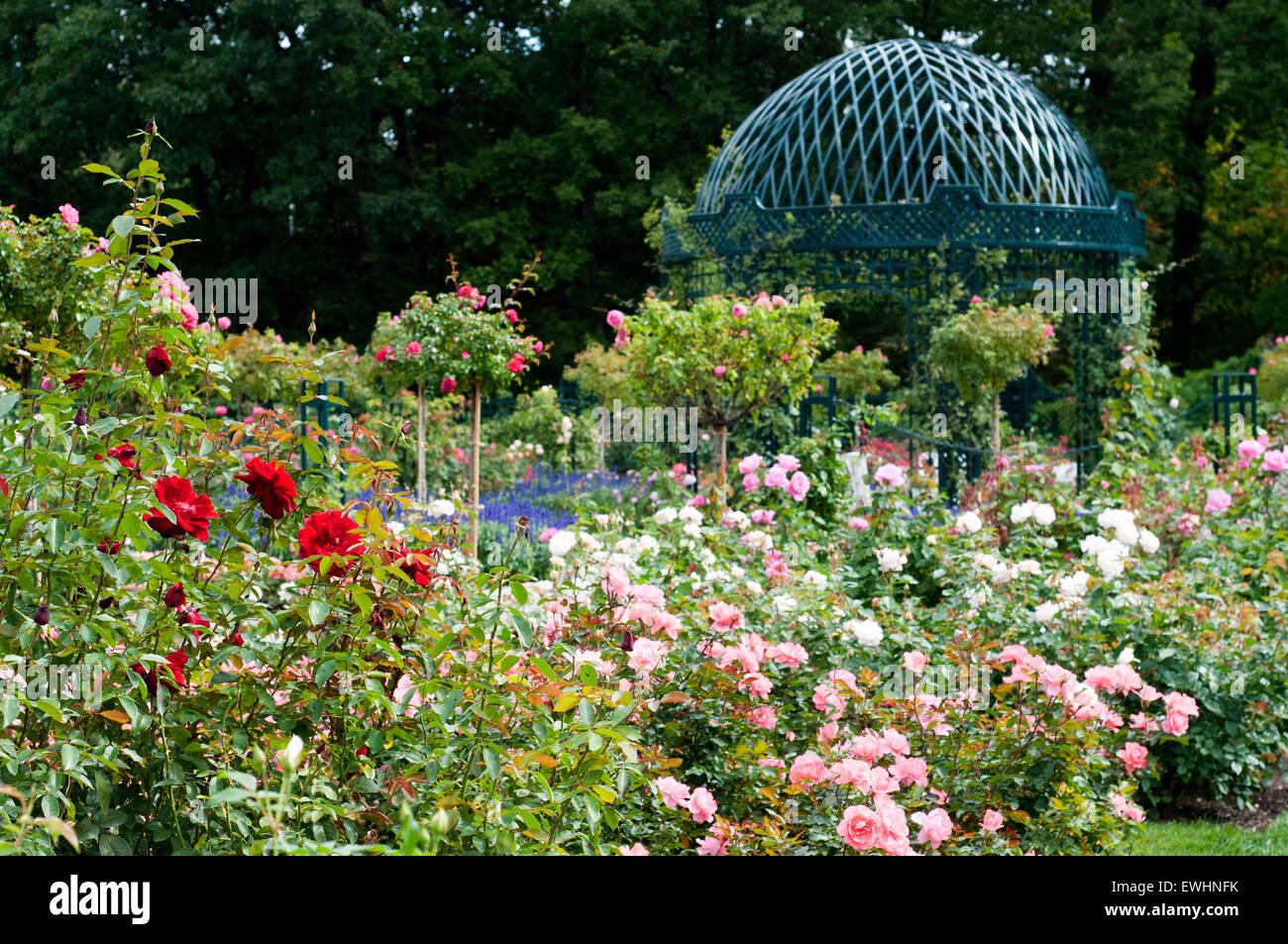 Peggy Rockefeller Rose Garden At The New York Botanical Garden New Stock Photo Royalty Free