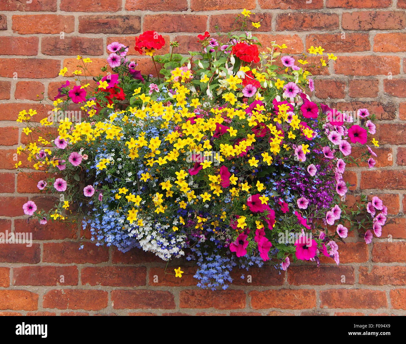 hanging basket against a brick wall containing bidens geraniums stock photo royalty free. Black Bedroom Furniture Sets. Home Design Ideas