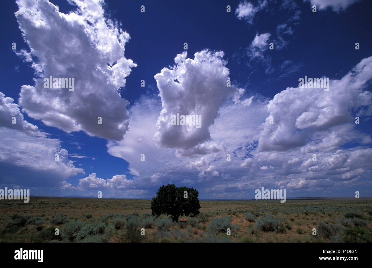 isolated-tree-in-arizona-with-cumulus-cl