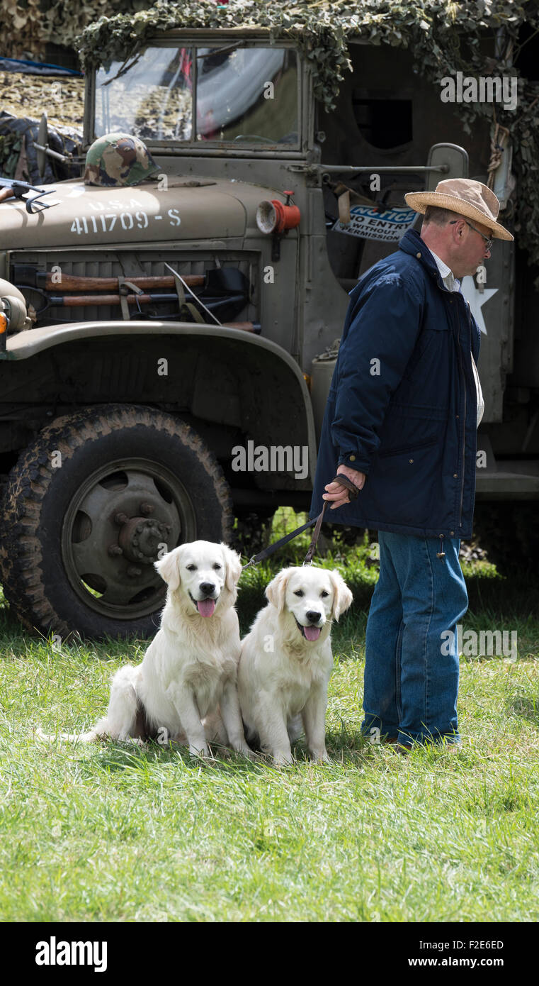 two-young-labrador-dogs-anticipating-arr