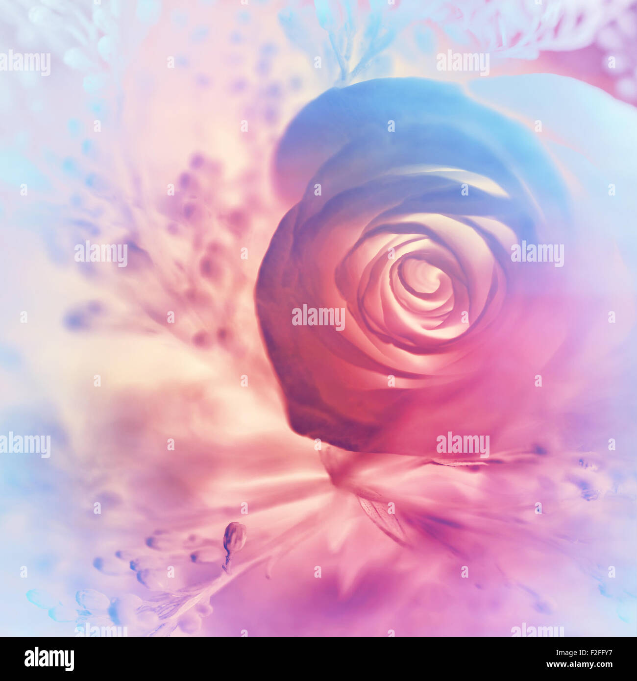 dreamy rose background abstract pink and purple floral