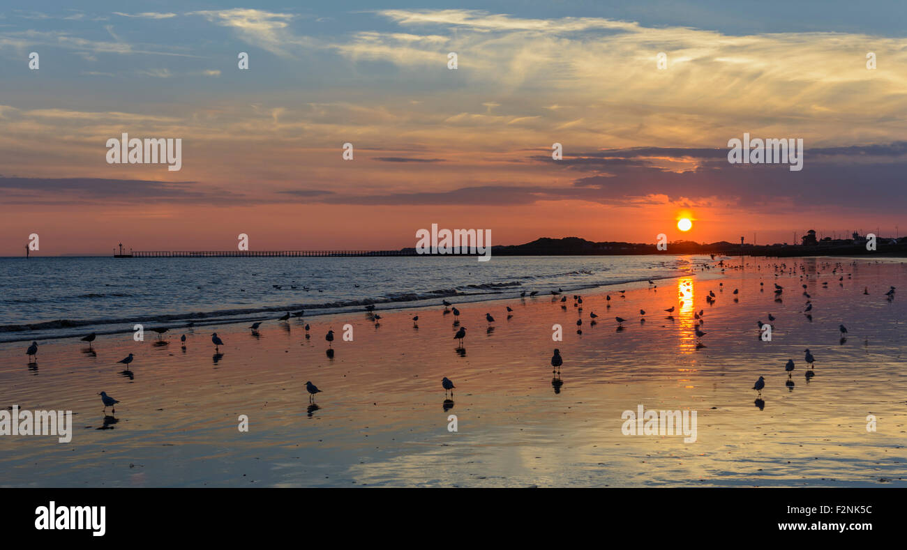 reflection-of-the-sun-on-a-beach-at-sunset-with-birds-relaxing-on-F2NK5C.jpg