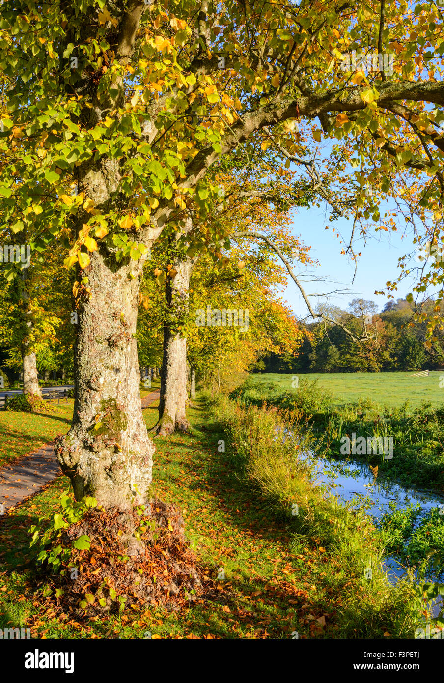 stream-and-trees-in-autumn-in-the-early-