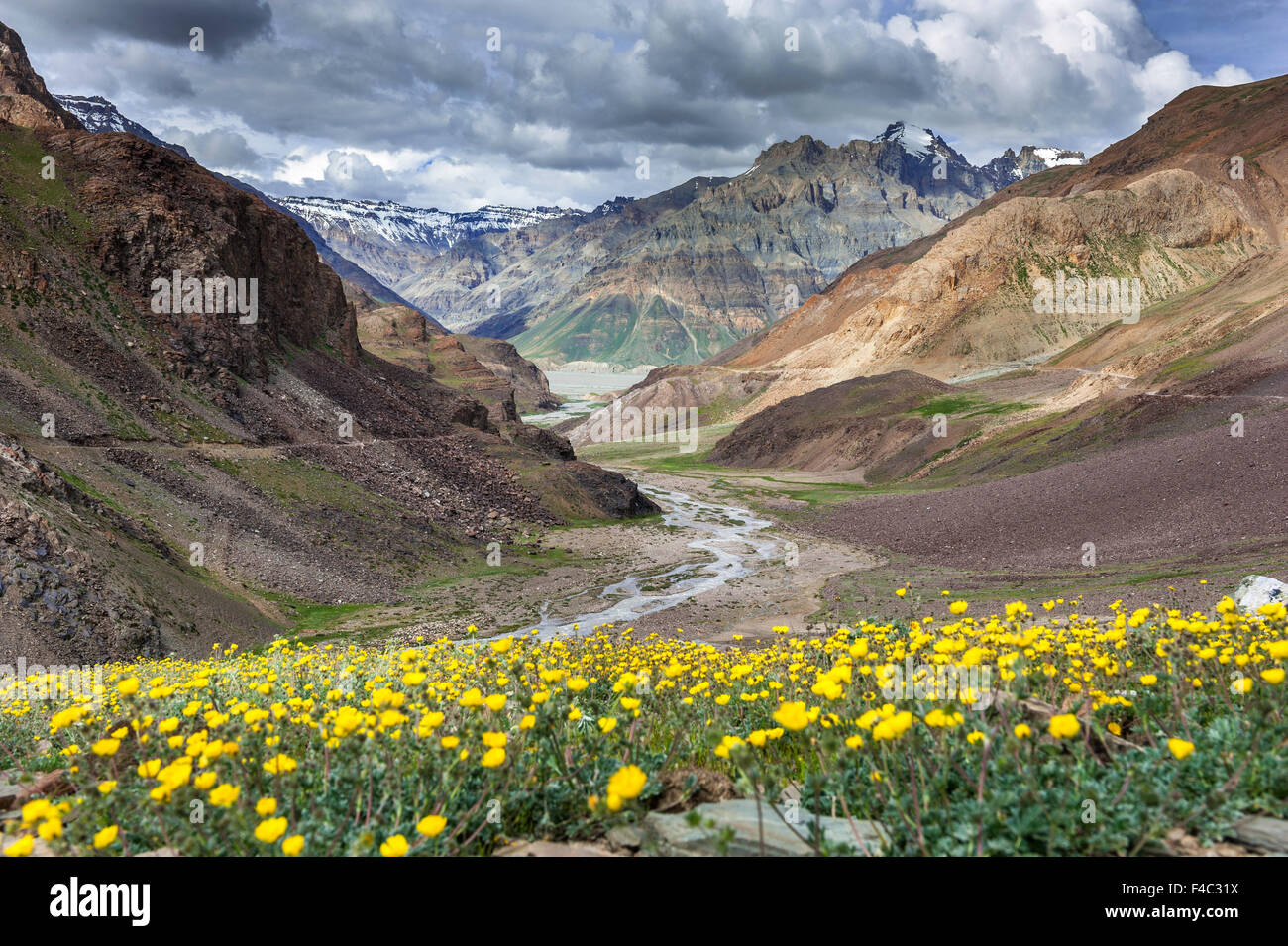 Valley of flowers on the way to Kaza in Himachal Pradesh Stock Royalty