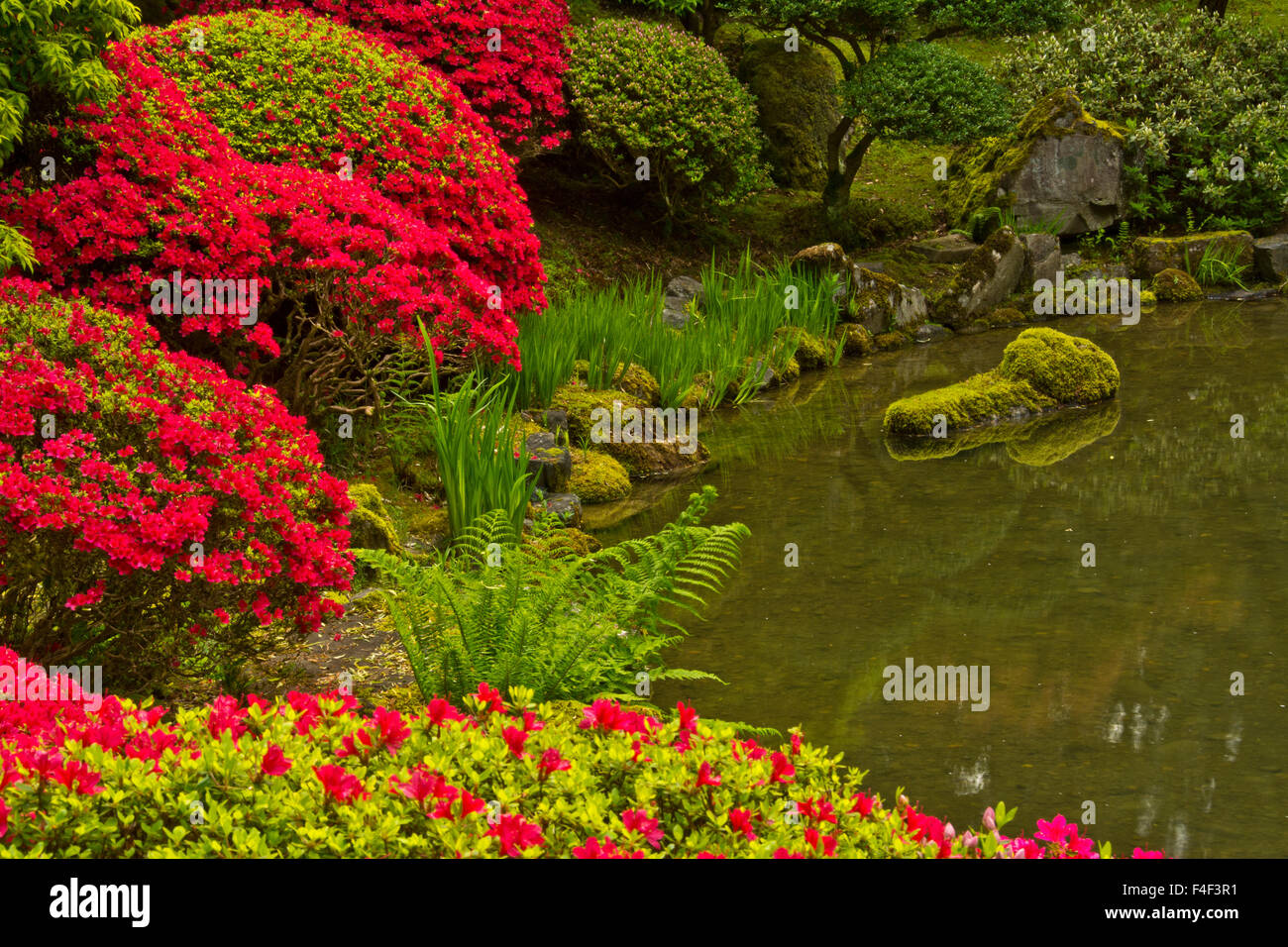 Portland Japanese Garden Spring Portland Oregon Usa Pr Stock Photo Royalty Free Image