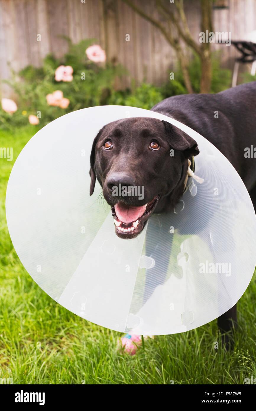 Big W Dog Head Cone