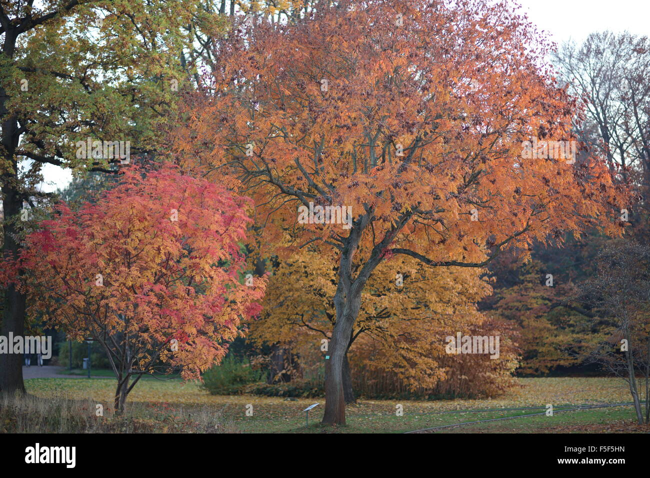 fall-in-frankfurt-botanical-garden-F5F5H