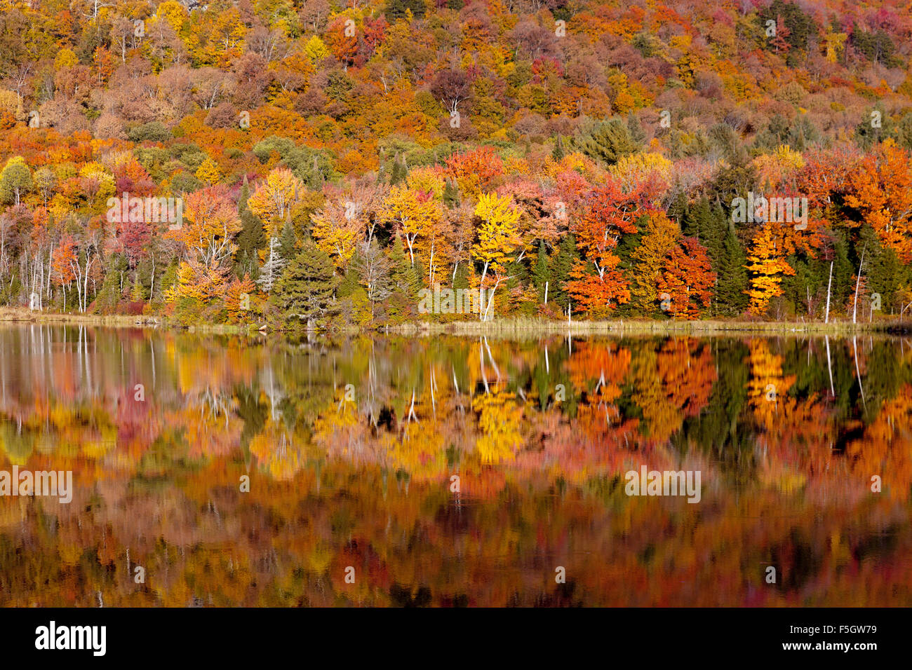 autumn-trees-foliage-and-their-reflectio
