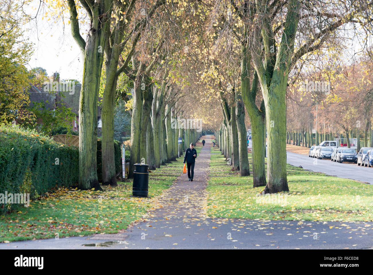 A man walking along a path lined with trees in letchworth for Garden city trees