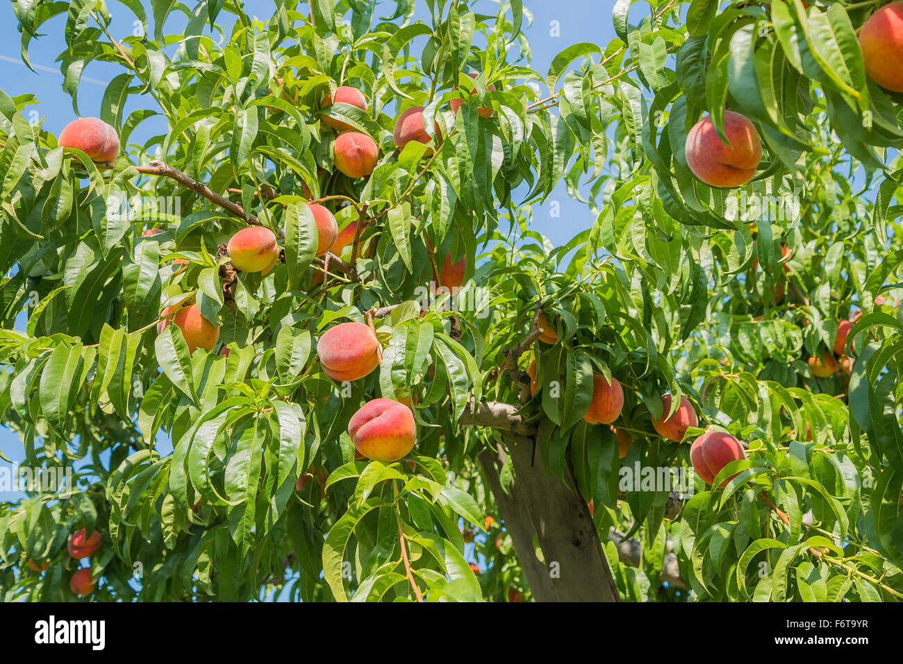 peach orchard hindu personals Endorse martins peach orchard  billing practices business integrity certification management communication customer service.