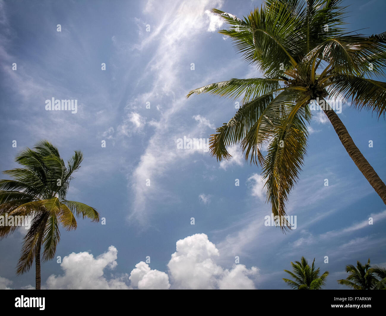 caribbean-palm-trees-dominican-republic-