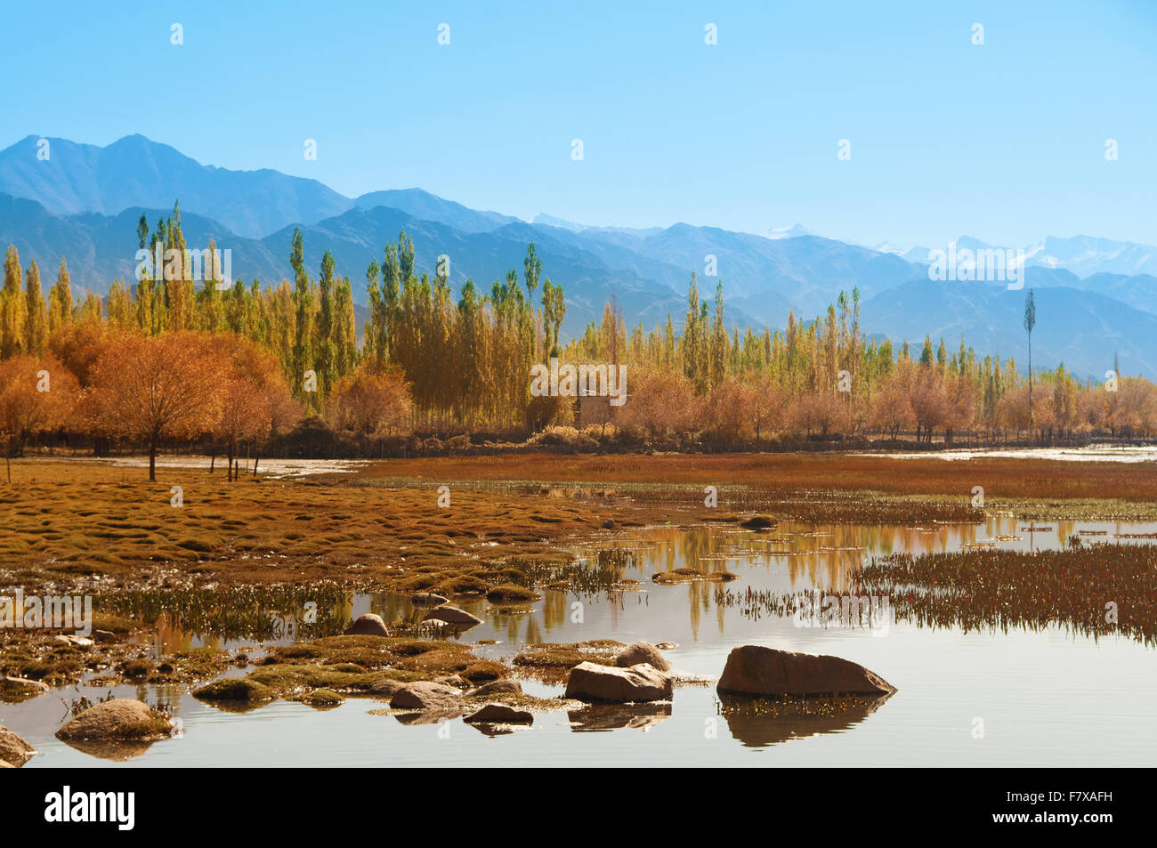 Holy fish pond at shey monastery leh ladakh india stock for Koi pond india