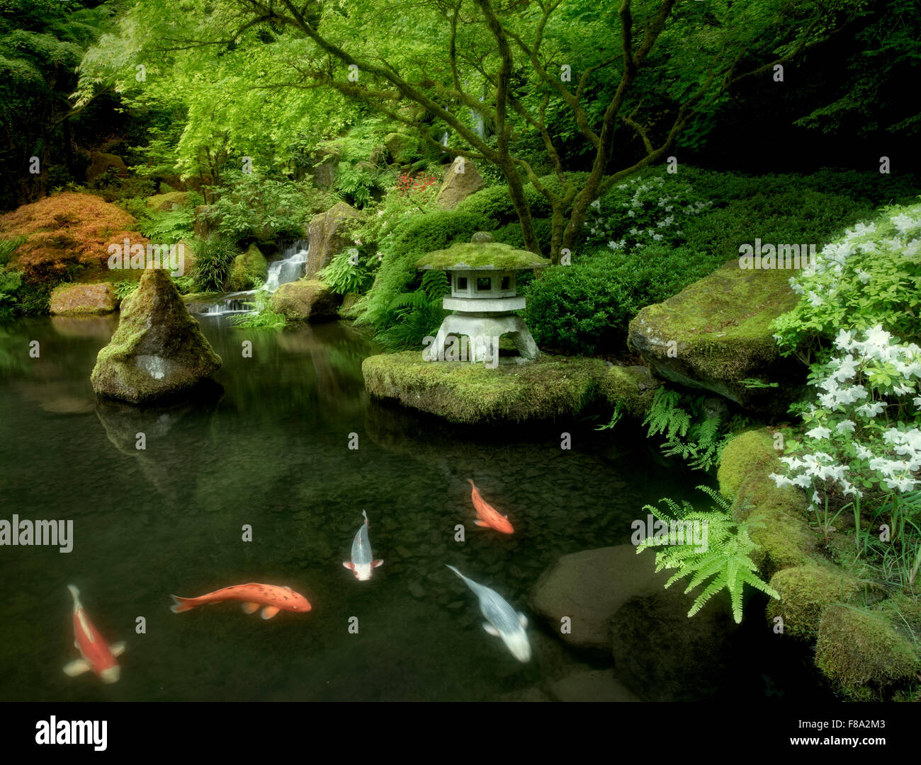Koi in pond with japanese lantern and waterfalls japanese for Japanese koi pond garden