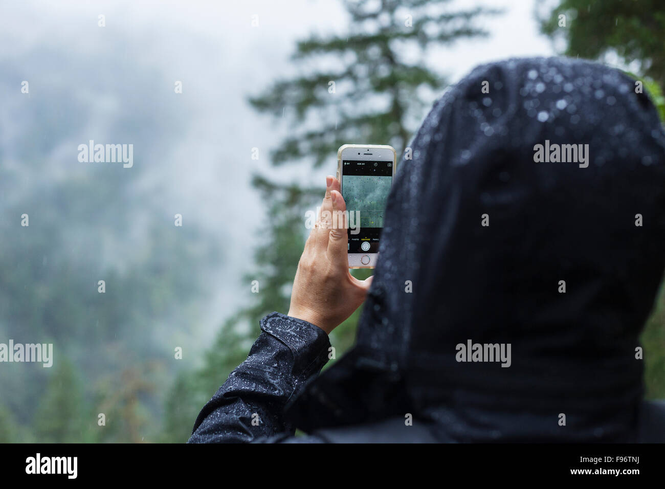 Woman taking photograph in the rain, BC, Canada Stock Foto