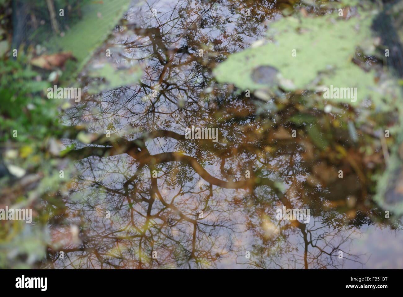 tree-reflection-in-pond-FB51BT.jpg