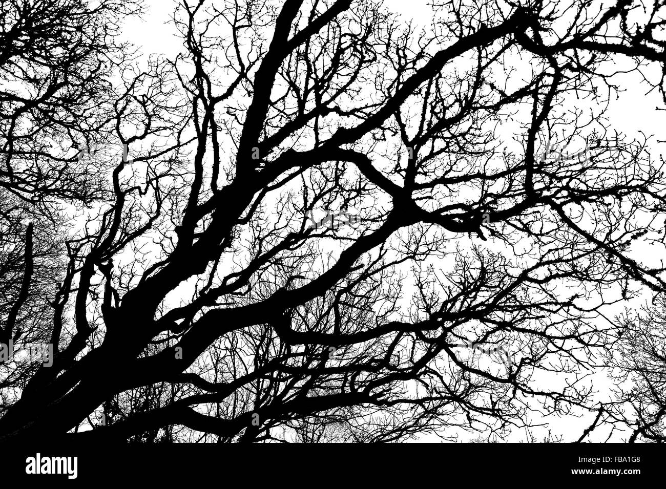 black and white abstract silhouette of winter tree