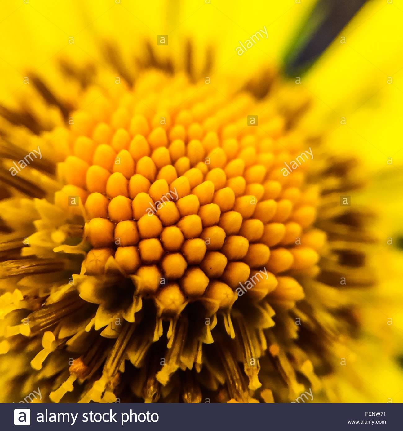 Detail Shot Of Yellow Flower Stock Foto