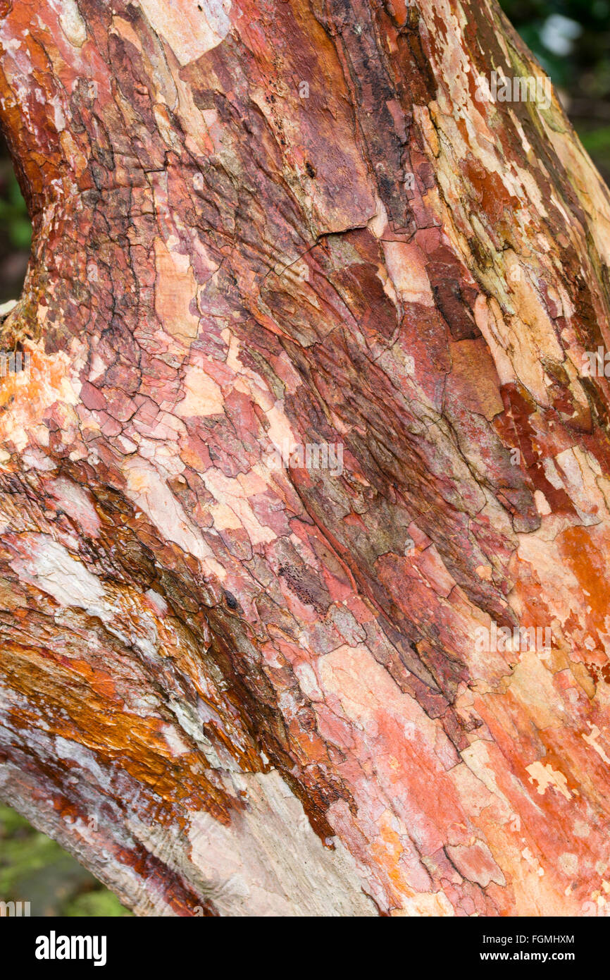 decorative-bark-of-the-evergreen-tree-rh