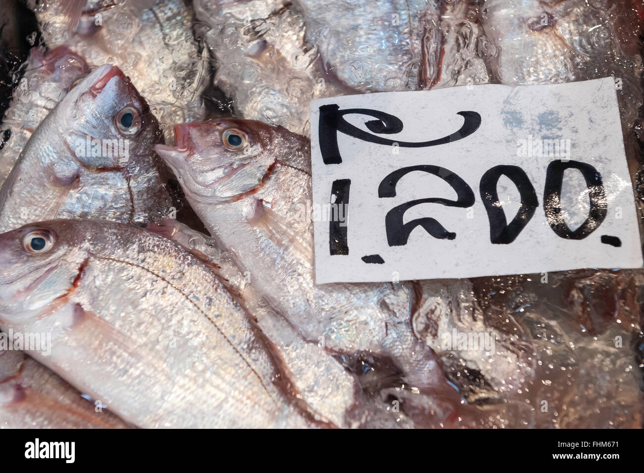 Fresh fish for sale tsukiji fish market tokyo japan for Stock fish for sale