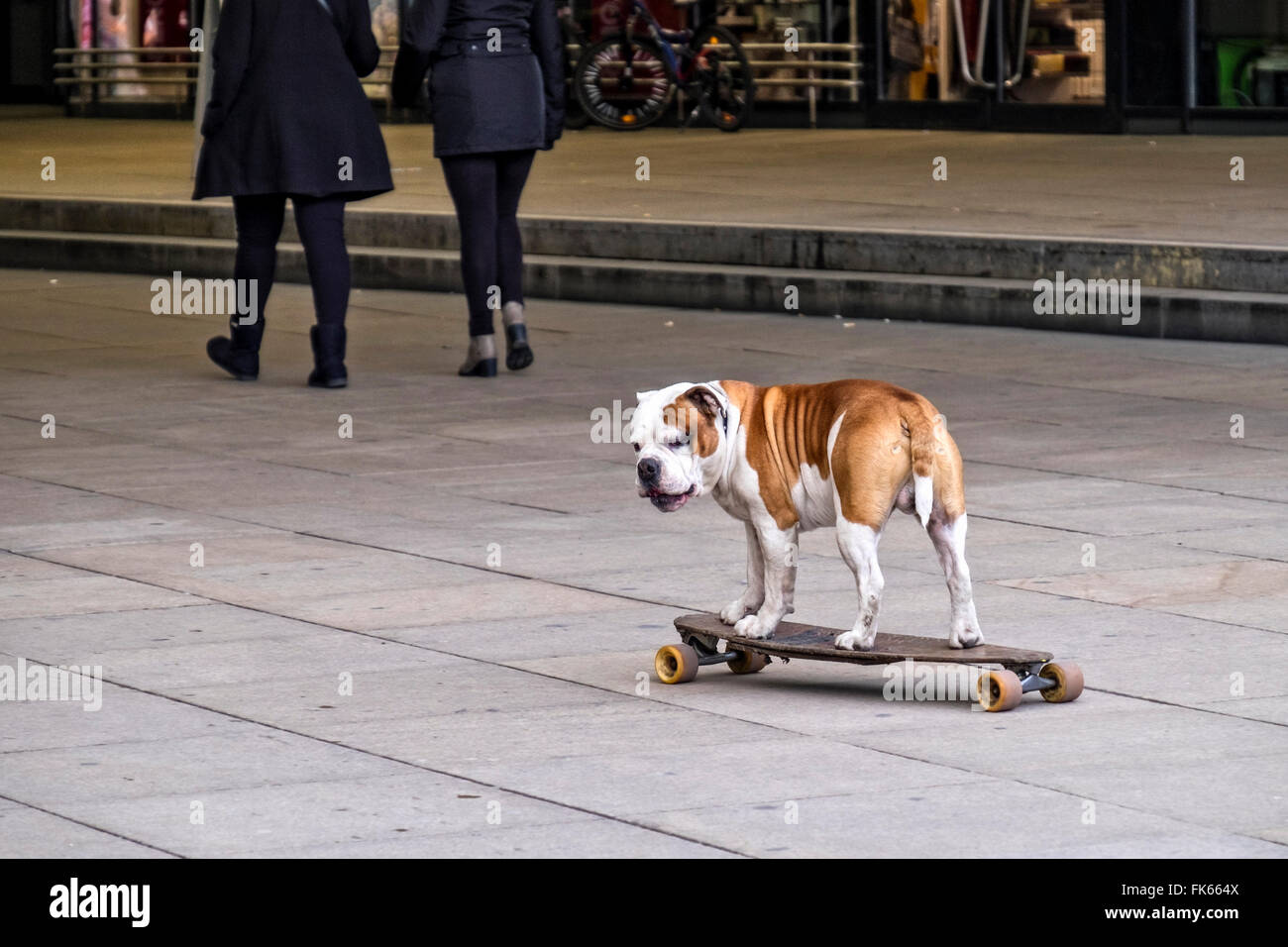 dog-on-skateboard-skateboarding-pet-in-b