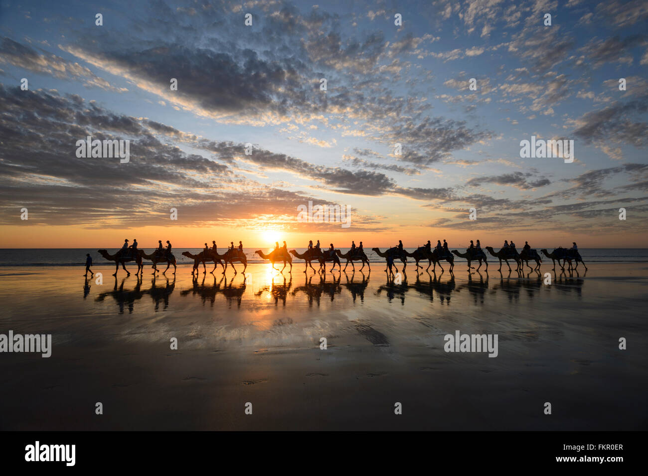Tourist camel train on Cable Beach at sunset, Broome, Kimberley Region, Western Australia, WA, Australia Stock Photo