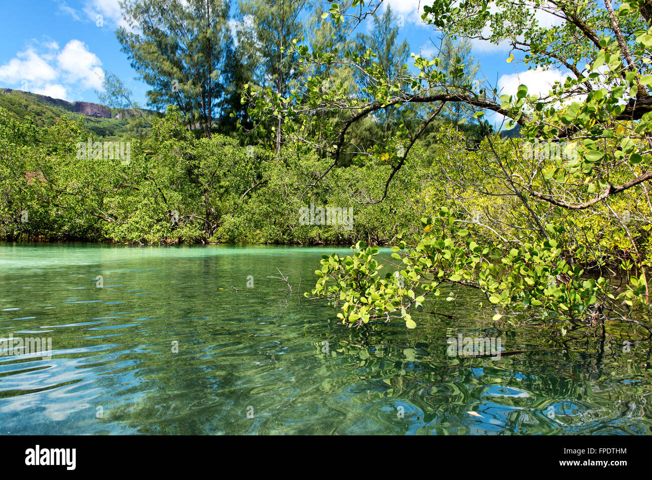 Coastal mangrove swamp off Mahe, Seychelles at Port Launay with the Stock Photo, Royalty Free ...