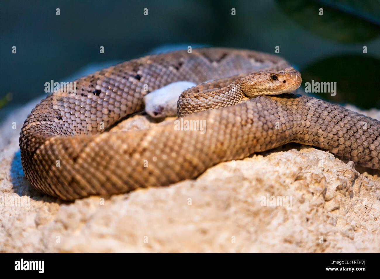 unknown-snake-FRFKDJ.jpg