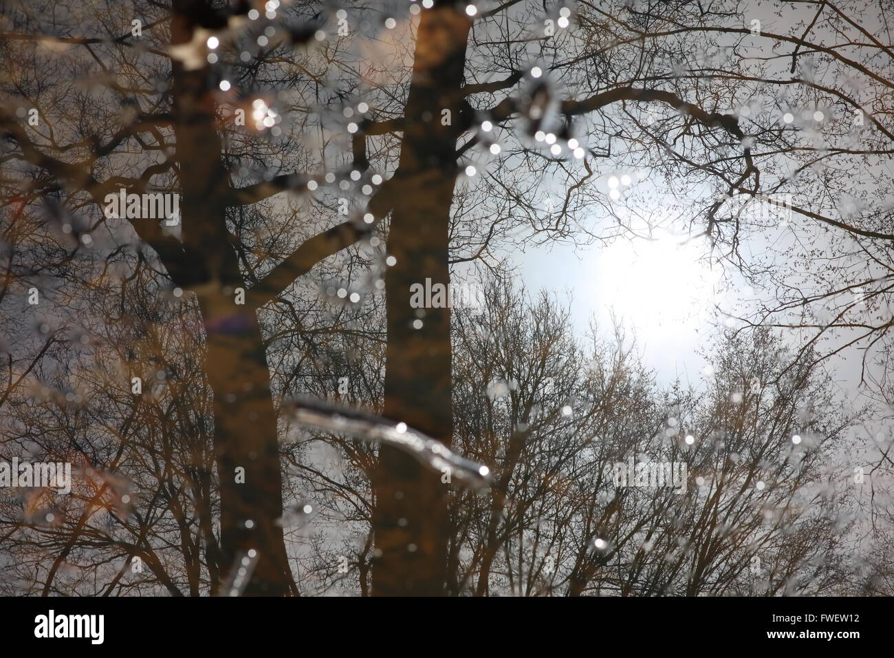 reflection-of-trees-in-a-large-puddle-wi