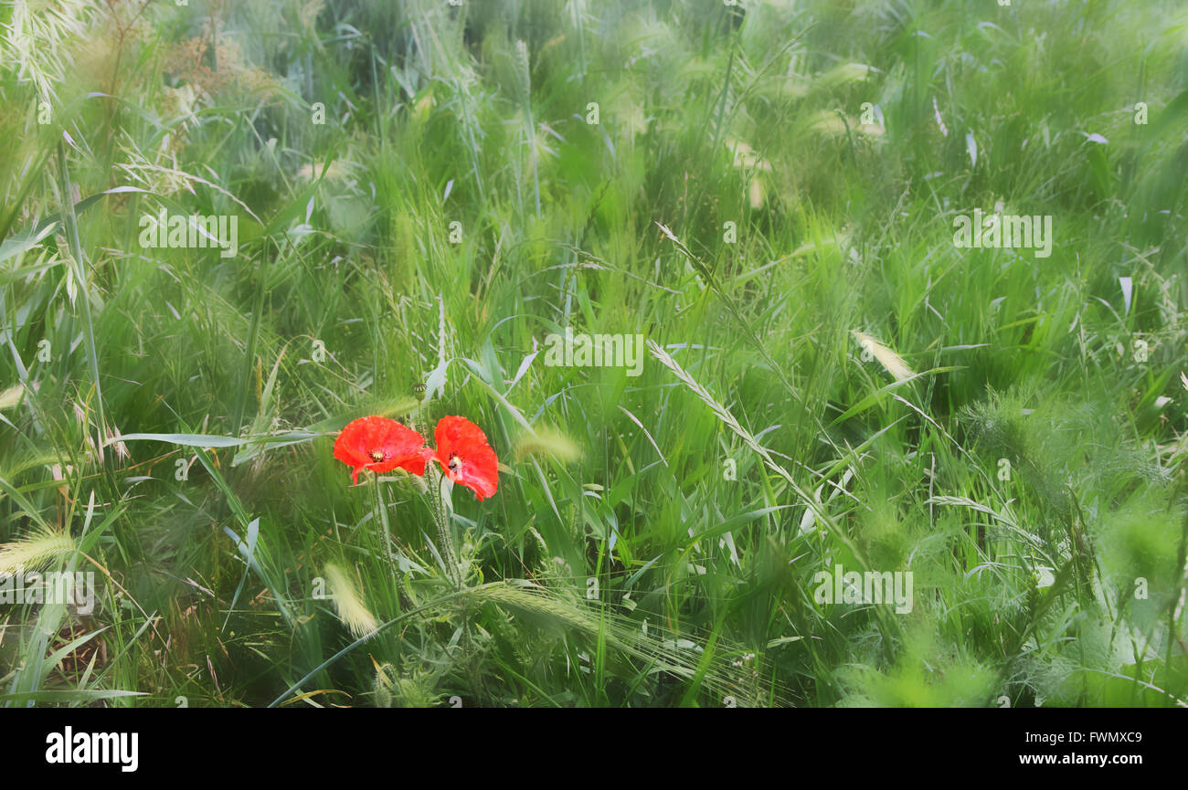 similar-toc4807f-image-cropped-and-blur-
