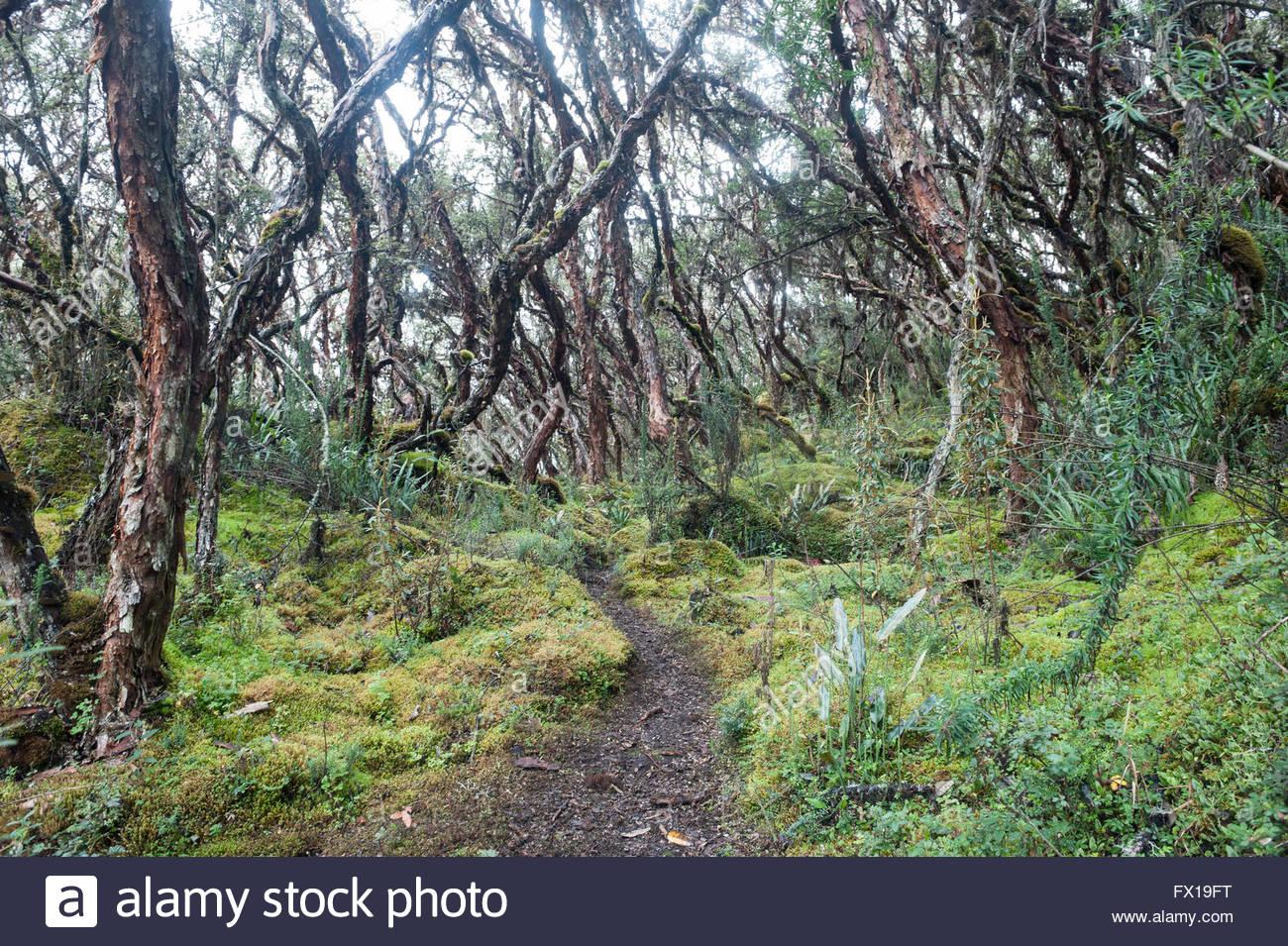 parque-nacional-el-cajas-ecuador-situate