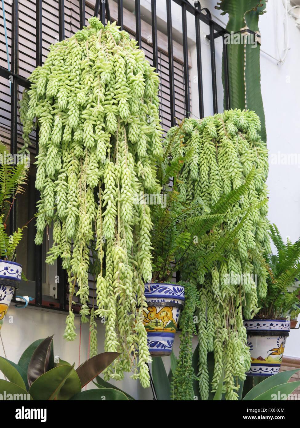 Hanging Indoor Plants In Corner Of Living Room
