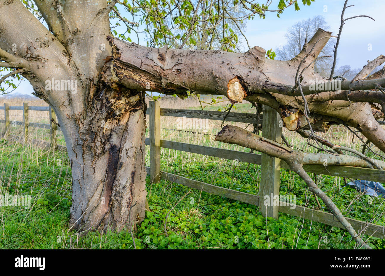 damaged-tree-with-branch-broken-off-and-